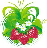 Strawberry fruits. Fruits and flowers of a strawberry against a vegetative ornament and leaves Royalty Free Stock Photo