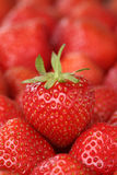 Strawberry fruits with copyspace Royalty Free Stock Image