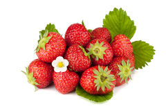 Strawberry fruits with flowers and green leaves Stock Images