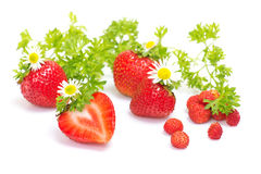 Strawberry fruits with flowers and leaves on white Royalty Free Stock Images