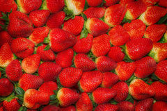 Strawberry - full frame Stock Photography