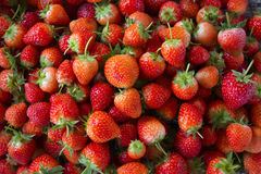 Strawberry - full frame Royalty Free Stock Images