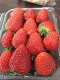 Strawberry at Thailand stock photo