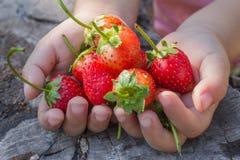 Strawberry in girl hand. Stock Photo