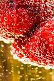 Strawberry in glass of champagne Stock Images