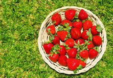 Strawberry on the grass Stock Photography