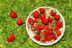 Strawberry on the grass Royalty Free Stock Photos