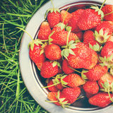 Strawberry on Green Grass, toned Royalty Free Stock Image