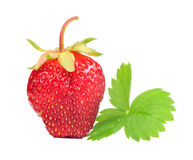 Strawberry with Green Leaf Royalty Free Stock Images