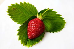STRAWBERRY - GREEN LEAVES Royalty Free Stock Image