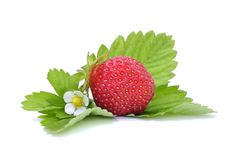 Strawberry on Green Leaves Stock Photos