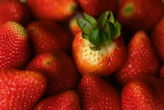 Strawberry Group Royalty Free Stock Photo