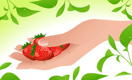 Strawberry in the hand Stock Photo