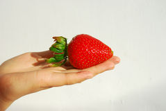 Strawberry and hand Stock Image
