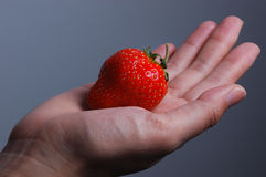 Strawberry in hand Stock Photos