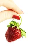 Strawberry in hand. Royalty Free Stock Image