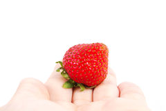 Strawberry in the hand. Strawberry with hand on a white background Stock Photos