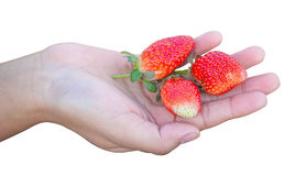 Strawberry on hand isolated Stock Image