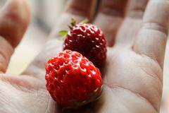 Strawberry in hand look joicy Stock Image