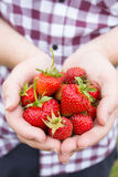 Strawberry handful Royalty Free Stock Images