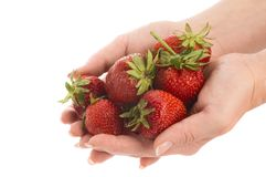 Strawberry in hands Stock Image