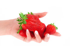 Strawberry in the hands on white background Royalty Free Stock Image