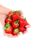 Strawberry in the hands on white background Stock Image