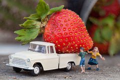 Strawberry Harvest. Giant strawberry on a miniature pickup truck Stock Photography