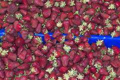 Strawberry. Heap on open market as background Stock Image