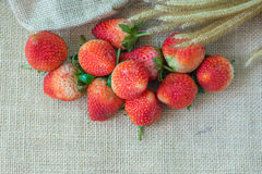 Strawberry hemp bags. Close up strawberry on a hemp bags with flowers Stock Image