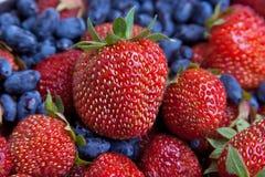 Strawberry and honeysuckle Stock Photos