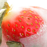 Strawberry in ice Stock Image