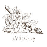 Strawberry 2 Royalty Free Stock Photography