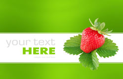 Strawberry isolated on a background. Strawberry isolated on a green and white background Royalty Free Stock Images
