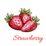 Strawberry isolated color sketch icon Royalty Free Stock Image