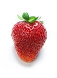 Strawberry isolated Royalty Free Stock Image