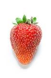 Strawberry isolated Royalty Free Stock Photo