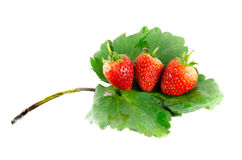 Strawberry isolated. And fresh, sweet on white and gray background royalty free stock photo