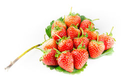 Strawberry isolated. And fresh, sweet on white and gray background stock photography