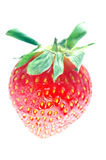 A strawberry isolated in white background. In close-up in falling position Stock Photo