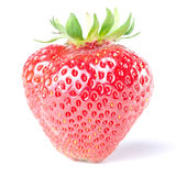 Strawberry isolated before white Royalty Free Stock Image