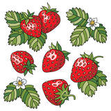 Strawberry. Juicy strawberry on white background. Set of vector illustrations stock illustration
