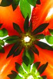 Strawberry kaleidoscope. Macro, shallow DOF, focus on foreground Stock Images