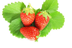 Strawberry with leaf Royalty Free Stock Photo