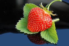 Strawberry leaf on black with a green background Stock Image