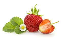 Strawberry, leaf and blossom isolated Royalty Free Stock Photo