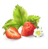 Strawberry, leaf  and flower. Vector illustration Royalty Free Stock Photography