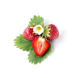 Strawberry with leaf  and floyers Stock Photos