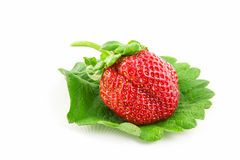 Strawberry on leaf Royalty Free Stock Images