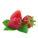 Strawberry with leaf isolated on white Royalty Free Stock Photography